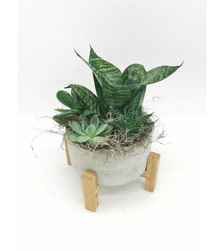 Pedestal Concrete Succulent Planter
