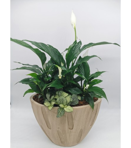 Bamboo Peace Lily Planter