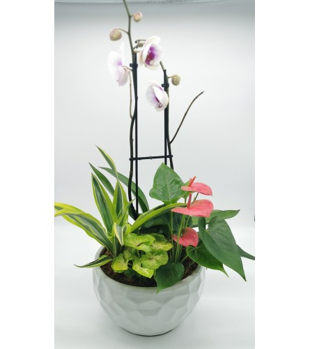 Modern Orchid Planter