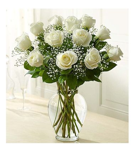 1 Dozen white roses in a vase with greens and baby's breath