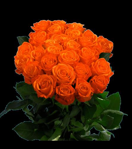 24 Long stem premium orange roses loose wrapped