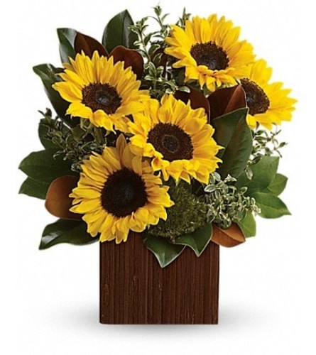 Sun Flowers in a cube