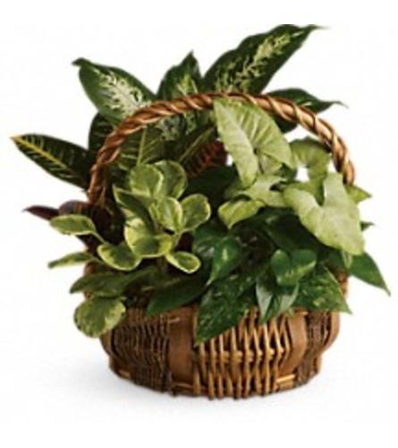 Emerald Garden Baskets