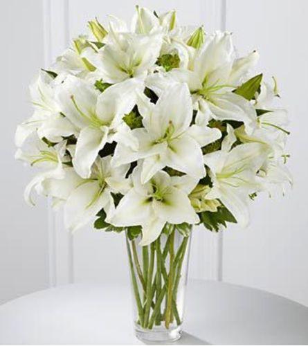 White Oriental Lily Elegance