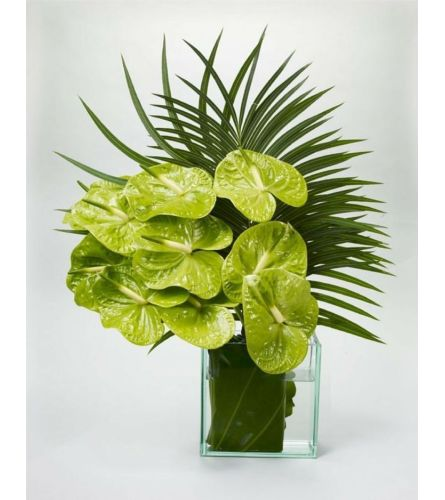 Organic Tropical Anthuriums