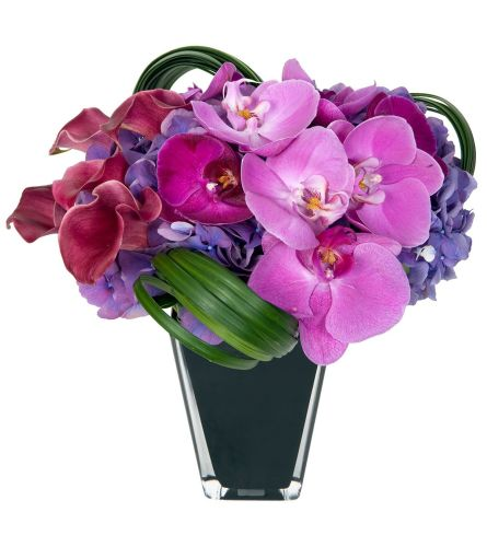 Purple Manhattan Flowers