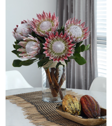 Pink King Proteas