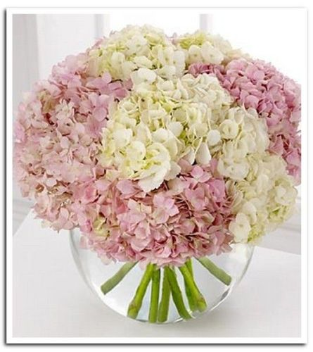 Pink Touch Hydrangea Luxe
