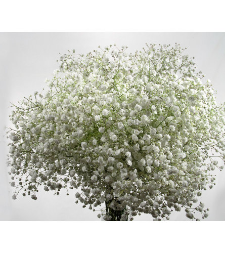 2 Bunches White Baby's Breath