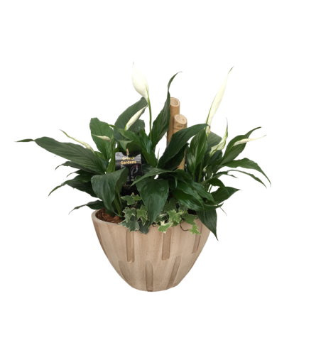 Cream Sympathy Planter