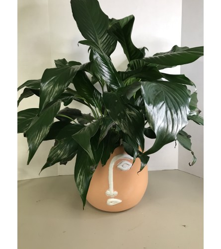 Face Planter with Peace Lily
