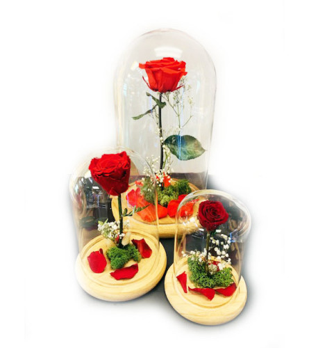 Beauty and the Beast - preserved roses / forever rose