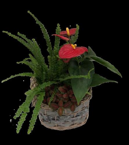 Medium Oval Planter