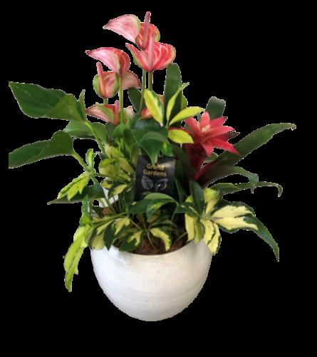 Cresta Anthurium Planter