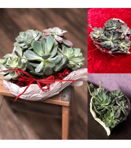 Tender love Heart of succulents