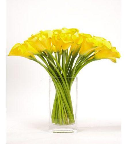 Yellow Calla Simplicity