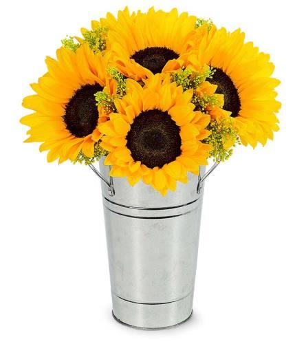 Fresh Sunflower Harvest