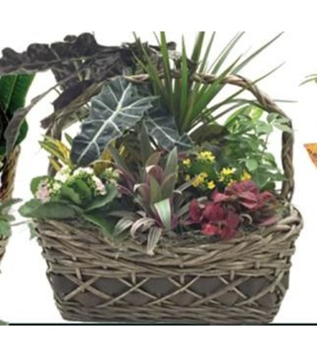 Delaware Planter Basket (Large)