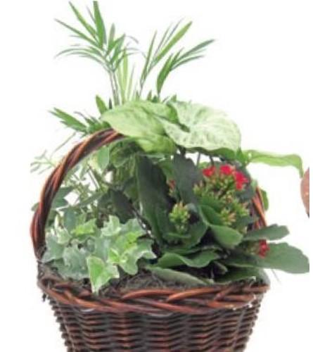 Round Basket Planter