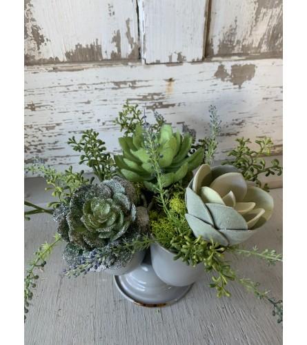Iced Tripod Succulent