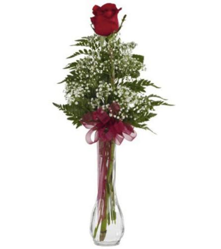 Single Red Romance