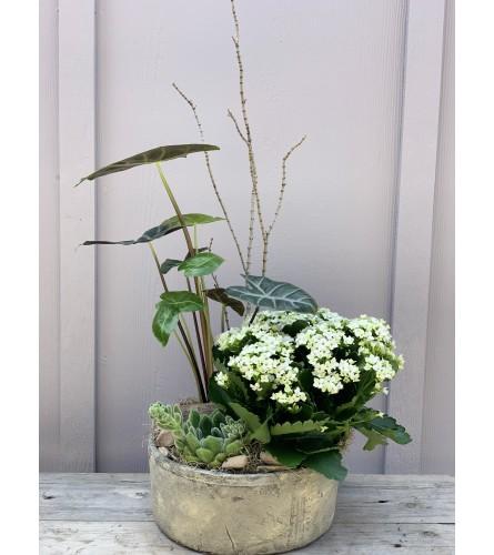 Plant Lover Mixed Foliage Bowl
