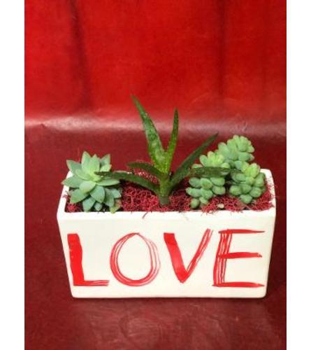 Love Succulents