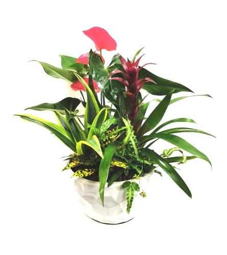 Tropical Paradise Planter