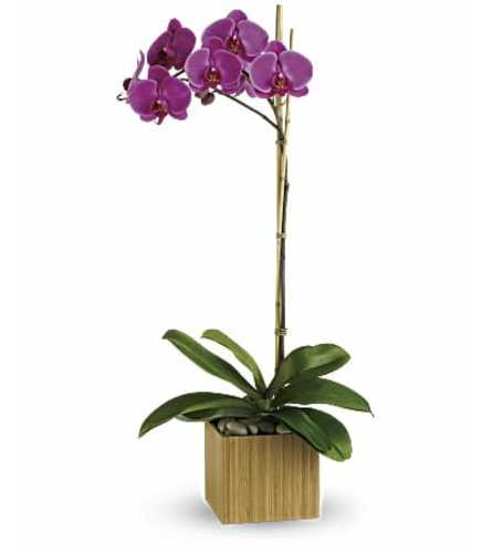 Purple Orchid in Natural
