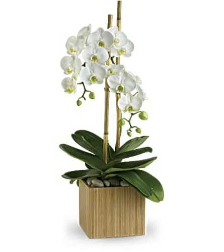 White Orchid in Natural