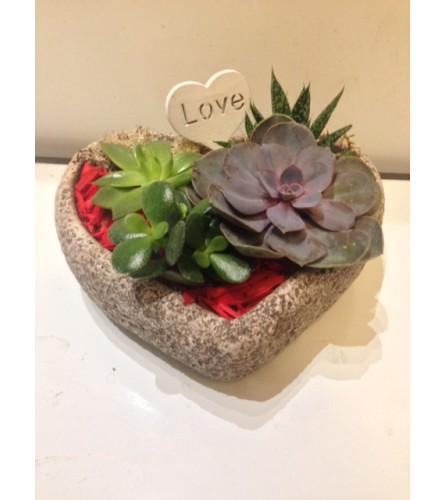 Valentine Heart Succulent planter