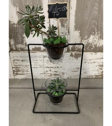 Double Decker Succulent