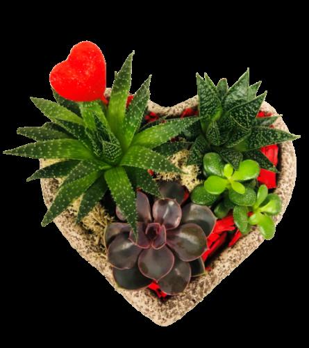 Heart Succulent Planter