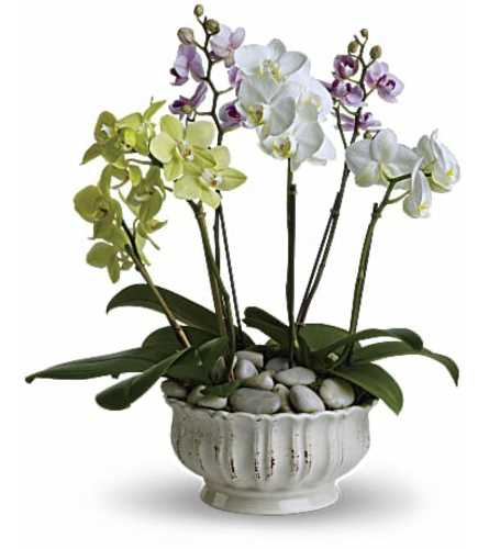 Grand Luxe Orchid Arrangement