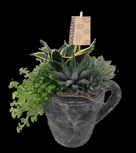 Pitcher Succulent Planter