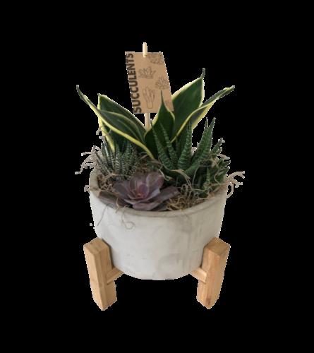 4 Legged Succulent Planter