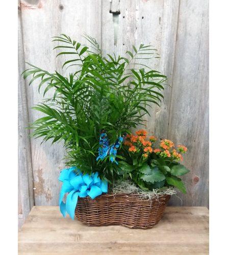 FM - Double Plant Basket