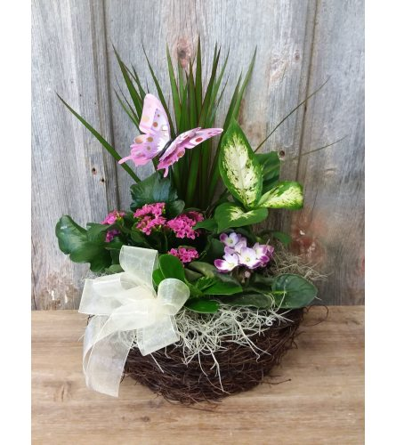 FM - Blooming Plant Dishgarden