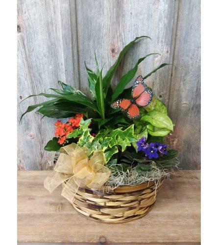 FM - Euro Plant Basket