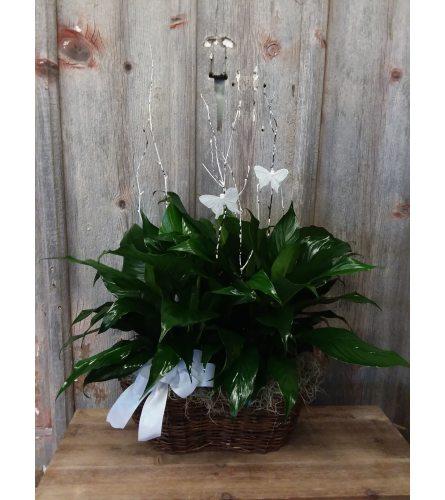 FM - Peace Lily Plant Garden