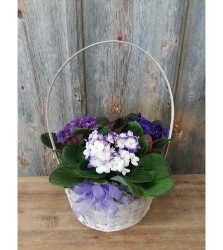 FM - Vibrant Violet Plant Basket