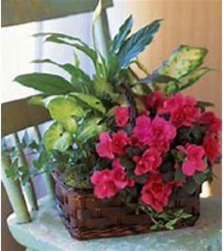European Plant Basket with a blooming and assorted green plants