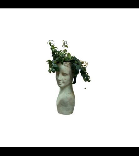 Grecian Plant Bust