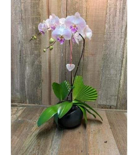 Orchid in Love