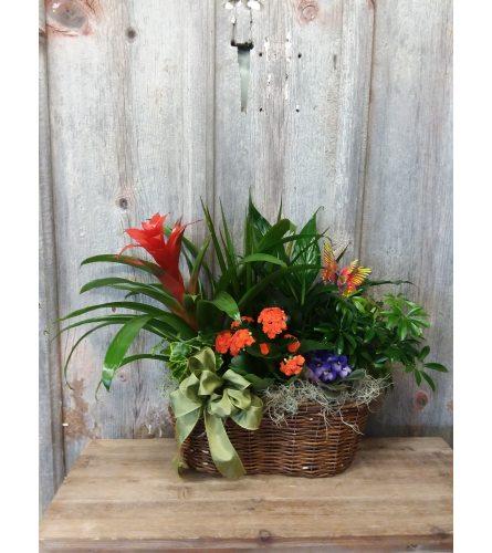 FM - Blooming Double Basket Plant Garden