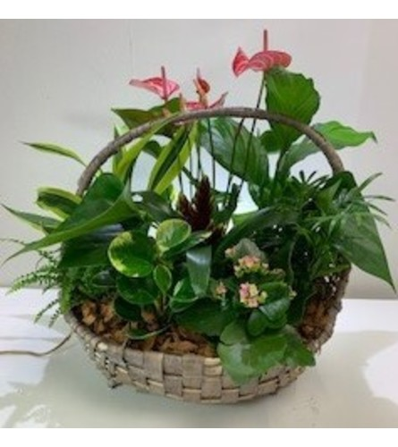 Flowering & Green Plants in a Basket