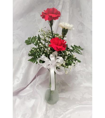 Carnation Surprise