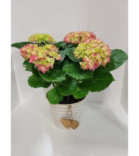 Pink Hydrangea Plant In Gold Heart Planter