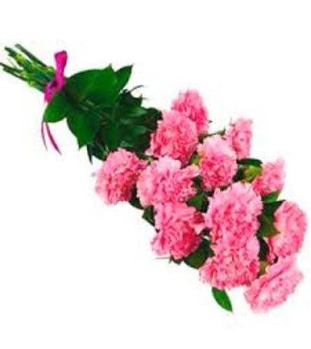Dozen Carnation Bouquet Wrapped