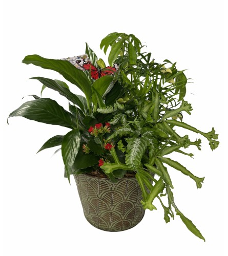 Tropical Dish Gardens